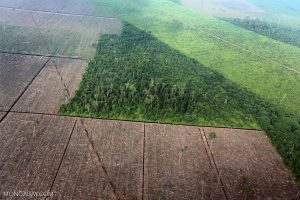 Forest lands being clear cut for farming
