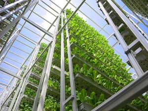 Hydroponic Racking System Sky View